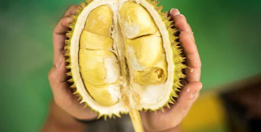 black gold durian